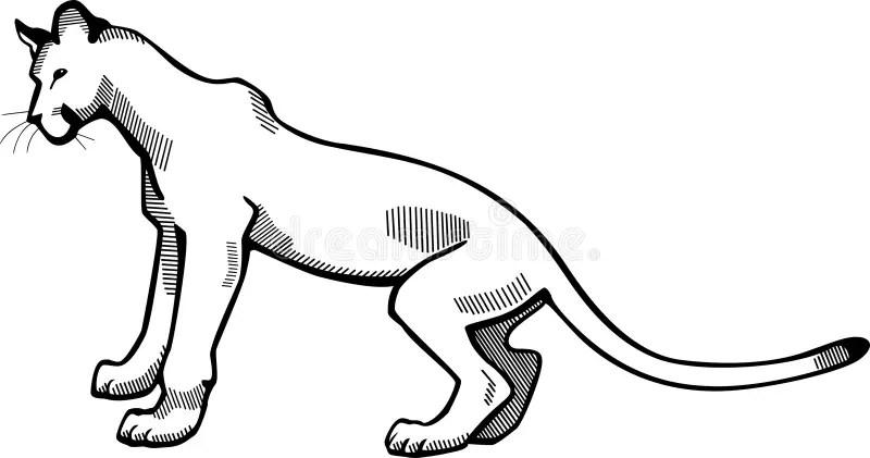 Puma stock vector. Illustration of black, mountain