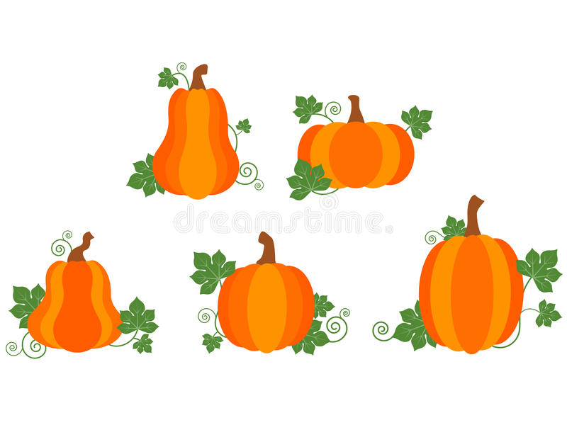 Pumpkin Patch Stock Photo. Image Of Vector, Fall, Autumn