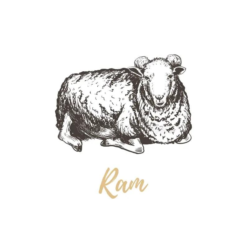 Hand sketch ram stock vector. Illustration of draw