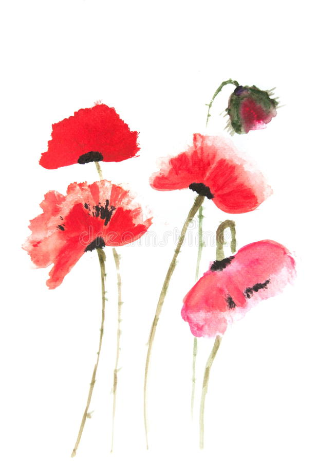 What colour are poppy flowers the best flower of 2018 poppy flower meaning mightylinksfo