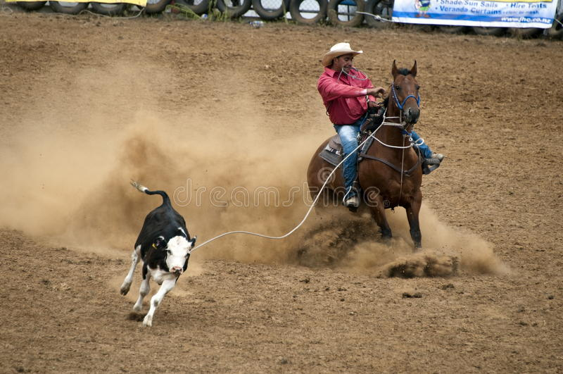 Rodeo Lassoing The Cow Editorial Stock Photo Image