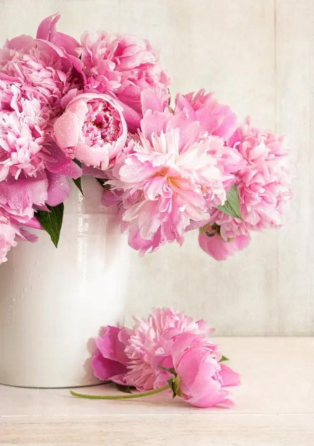Rosafarbene Pfingstrosen Im Vase Stockfotografie  Bild