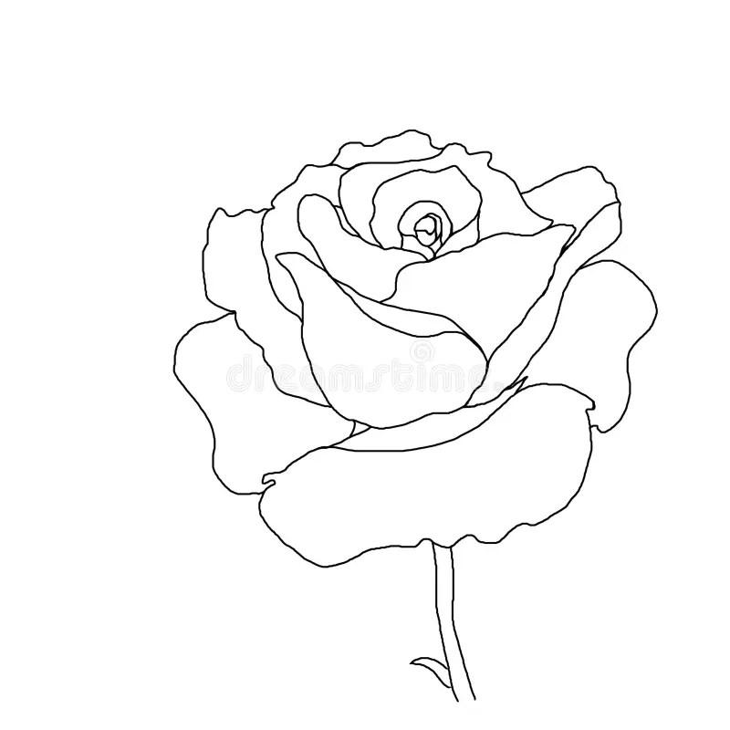 Rose Stem Drawing At Getdrawings Com