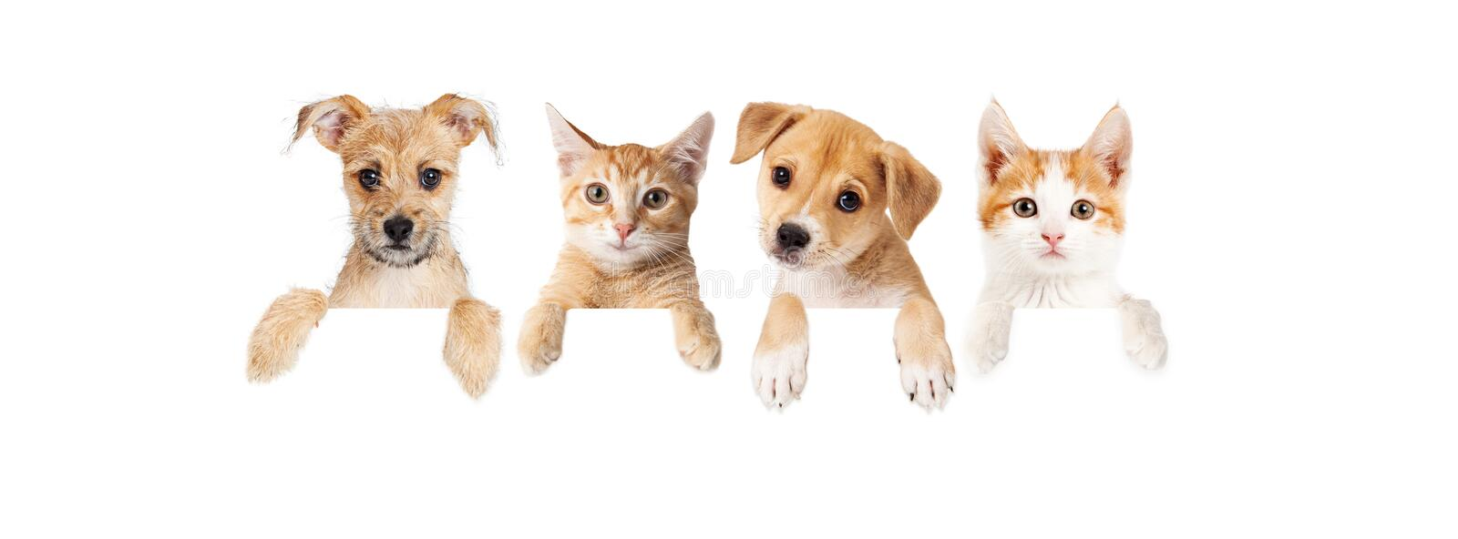 365 Puppies Kittens Photos Free Royalty Free Stock Photos From Dreamstime