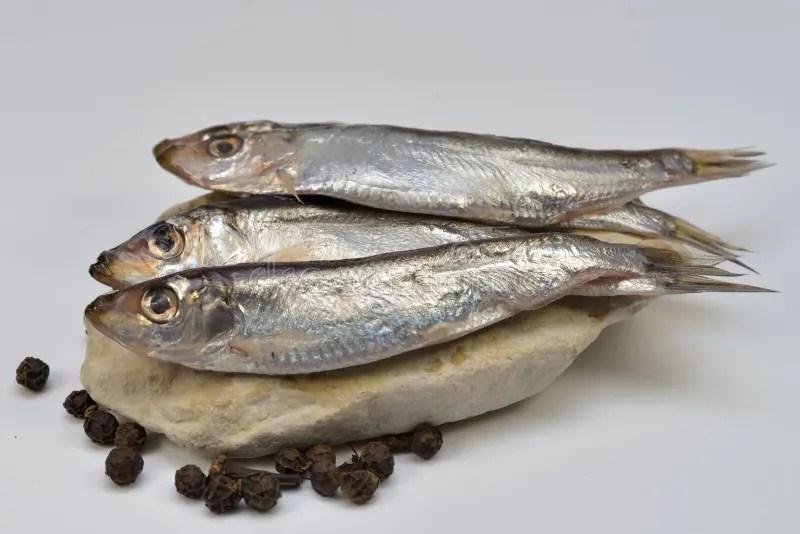 Salted Sprat Fish stock image. Image of sprat. herring - 107803769