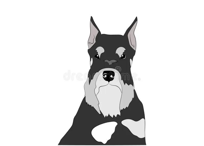 And Schnauzer Cartoon Silver Black