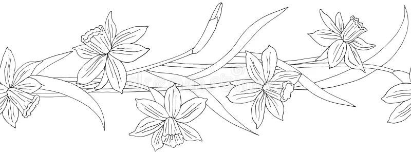Daffodils border stock vector. Illustration of daffodil