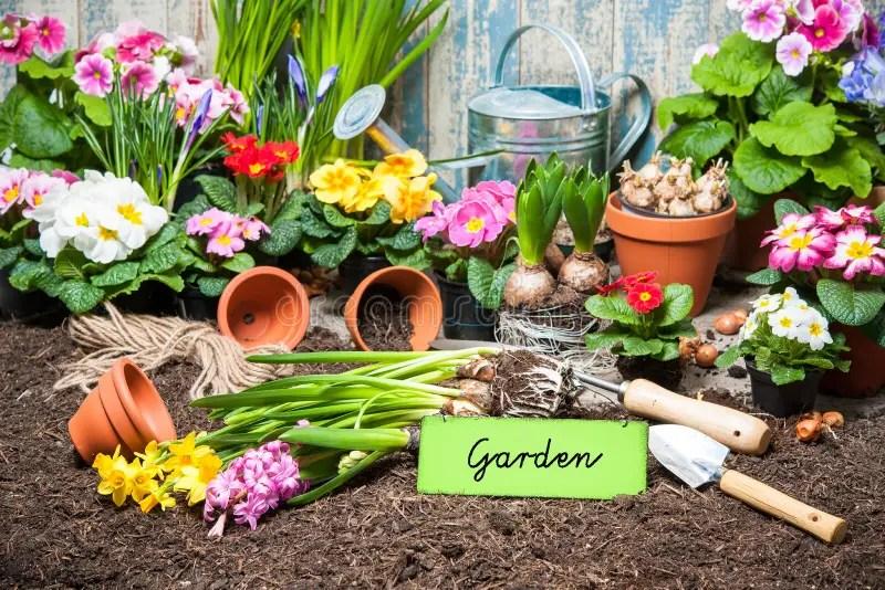 Segno E Fiori Di Giardinaggio Immagine Stock  Immagine di daffodils orticoltura 50432969