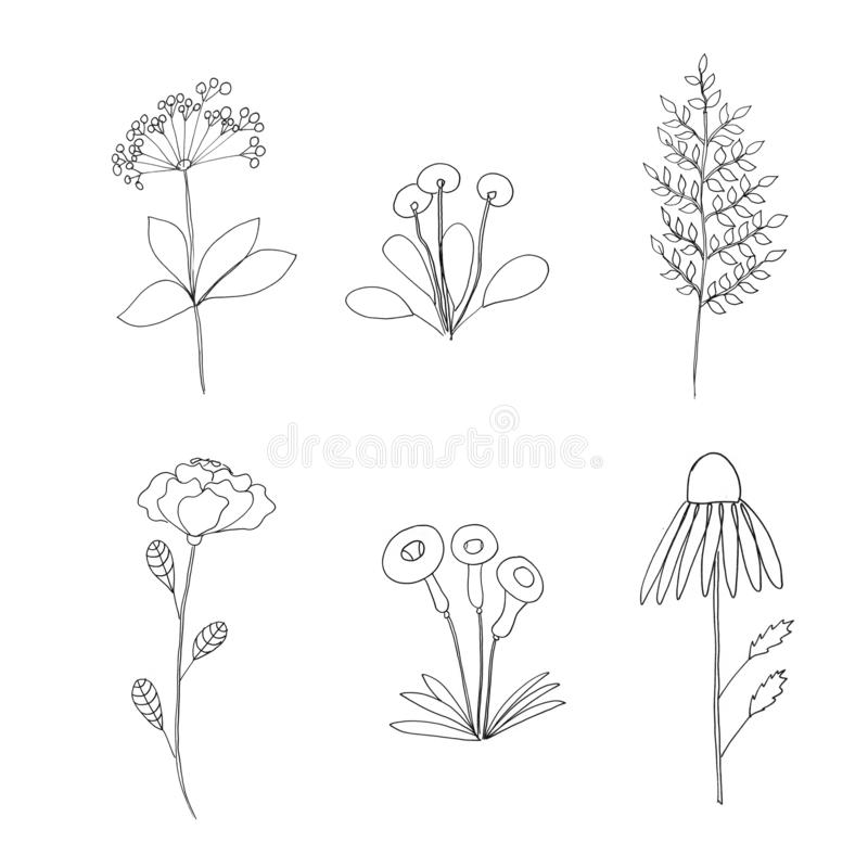 Graphic plants stylization stock vector. Illustration of