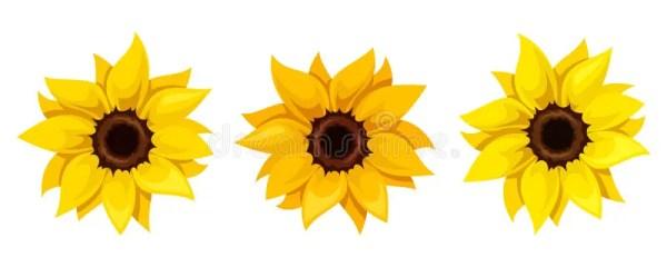 set of three sunflowers. vector