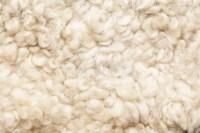 Carpet Wool Sheep - Cfcpoland