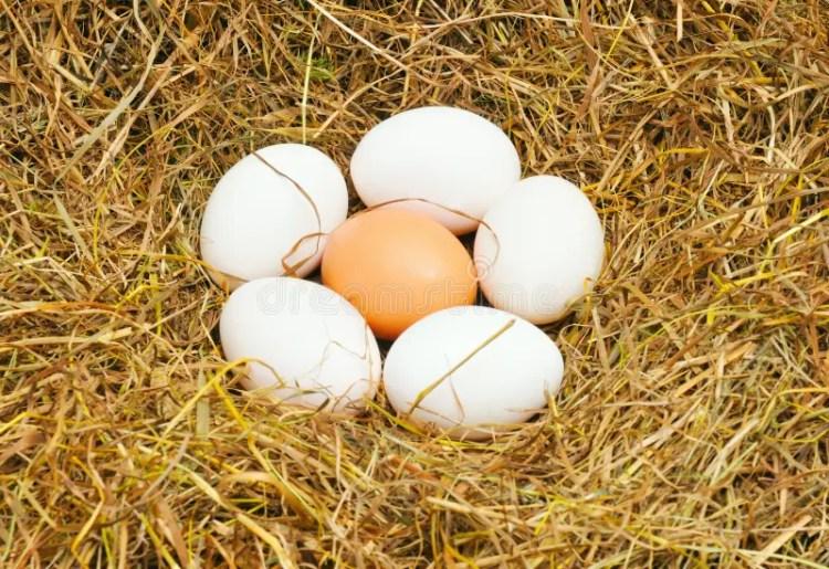 Six Eggs Free Stock Photos