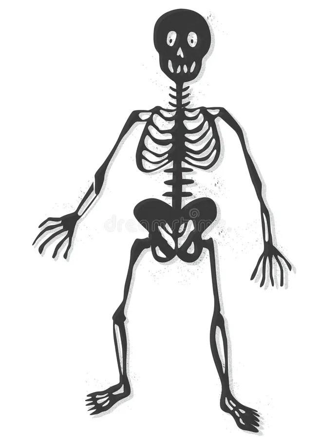 Skeleton vector stock vector. Illustration of chest, human
