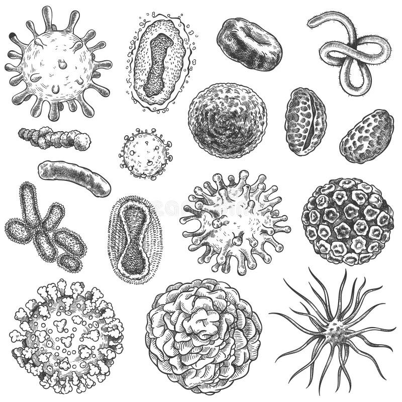 Sketch Virus. Bacteria, Coronavirus Germ Biology Micro