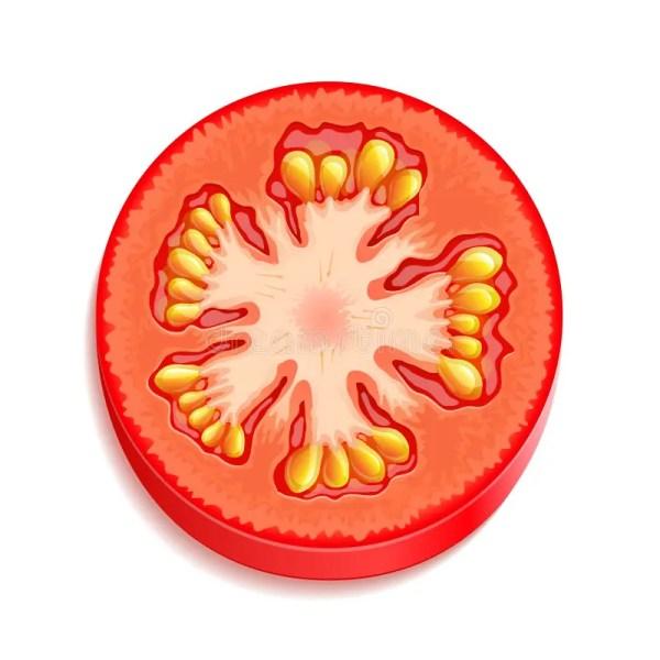 slice of tomato stock vector. illustration
