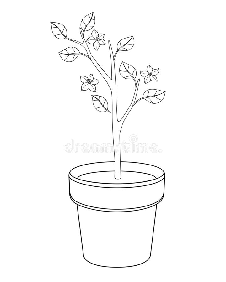 Tree sapling stock vector. Illustration of develop, soil