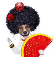 spanish dog royalty free stock