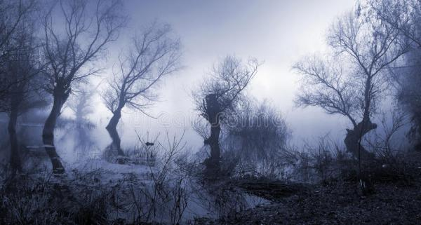 spooky dark and foggy landscape