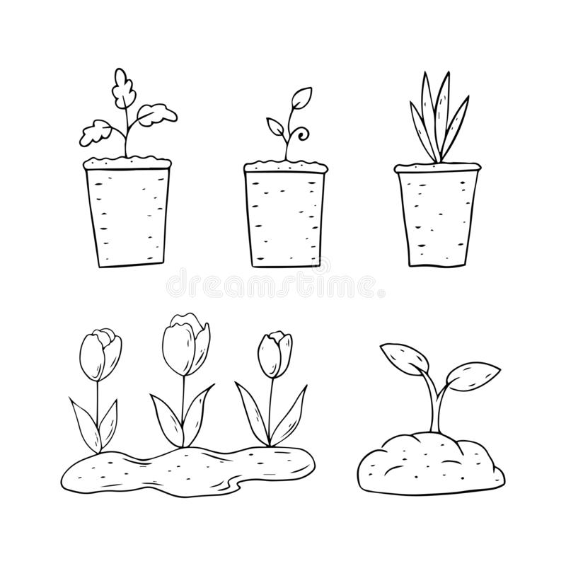 Flower In Pots Growth Stages Isolated On White Stock