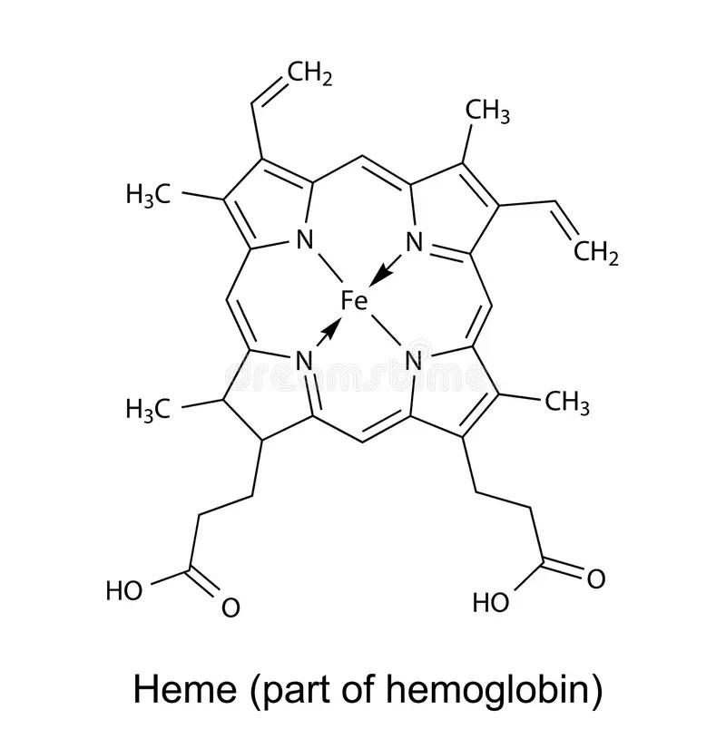 Structural Chemical Formula Of Heme Molecule Stock Vector