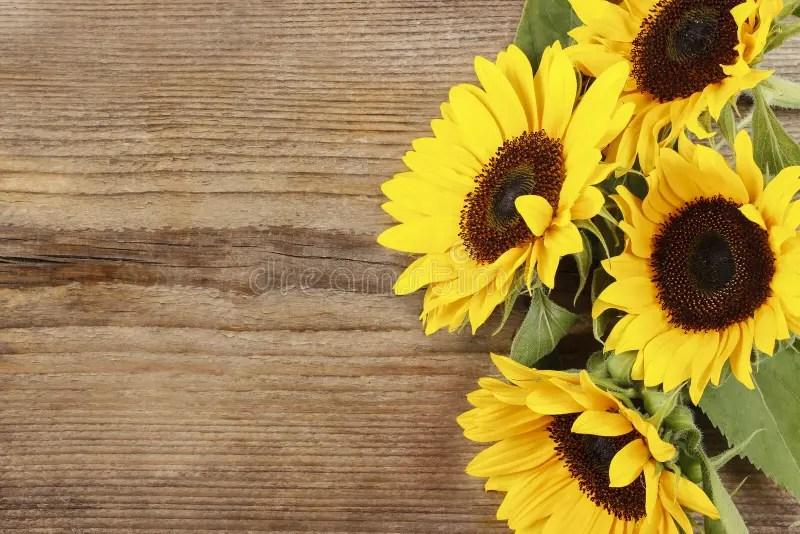 Fall Border Wallpaper For Desktop Sunflowers On Wooden Background Stock Image Image Of