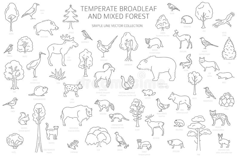 Ecosystem Stock Illustrations