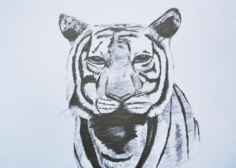 42 Pencil Drawing Tiger Photos Free Royalty Free Stock Photos From Dreamstime