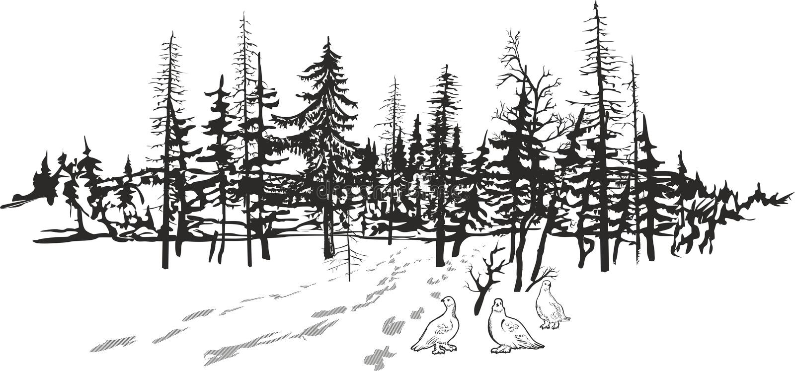 The largest biome in the world, the taiga expands through most of canada, scandinavia, russia and even parts of japan. Northern Taiga Stock Illustrations 169 Northern Taiga Stock Illustrations Vectors Clipart Dreamstime