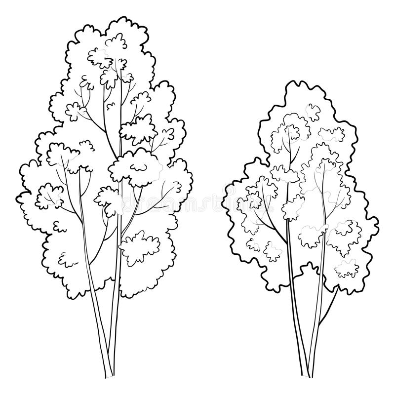 When drawing pictures of the seasons, what do you usually draw to show autumn? Trees Deciduous Stock Illustrations 4 060 Trees Deciduous Stock Illustrations Vectors Clipart Dreamstime