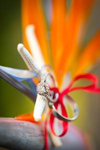 Tropical wedding rings stock photo. Image of nature ...