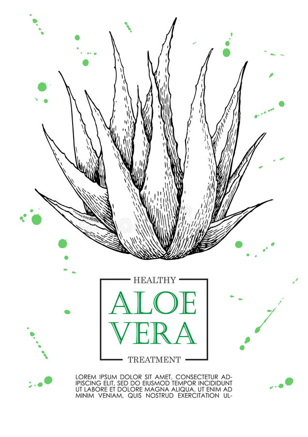 Vector Aloe Vera Hand Drawn Illustrations. Aloe Vera