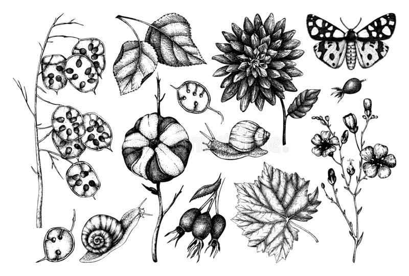 Collection Of Leaves And Butterflies Stock Vector