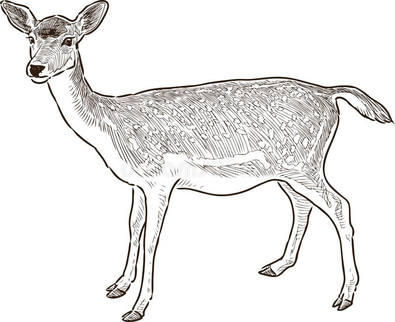 Deer stock vector. Illustration of realistic, drawn, snout
