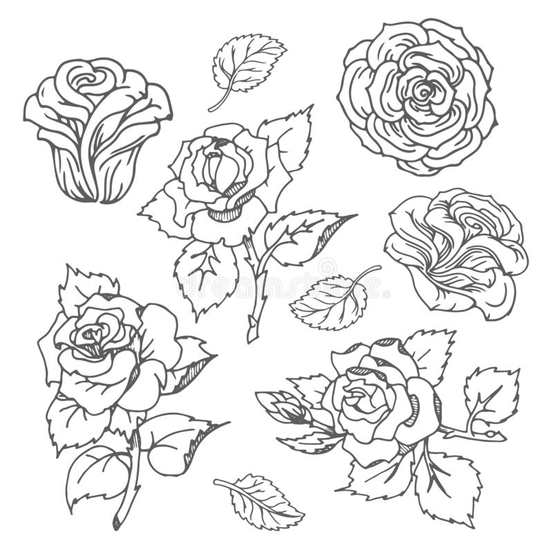 Three Roses In Hand Drawn Style Stock Vector