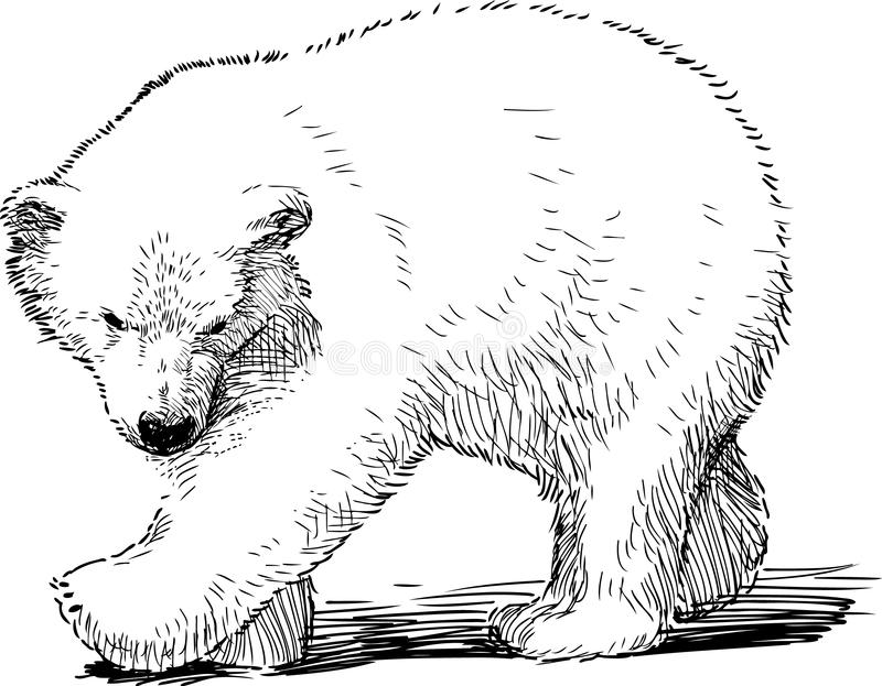 Piccolo orso polare illustrazione vettoriale