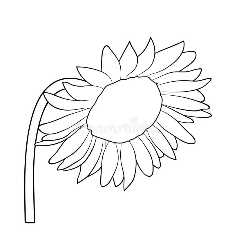 Vector Illustration Of Impatiens Flower Stock Vector