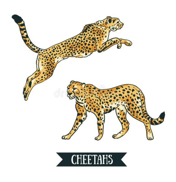 Vector Illustration With Leopard Cheetah. Jumping Animal