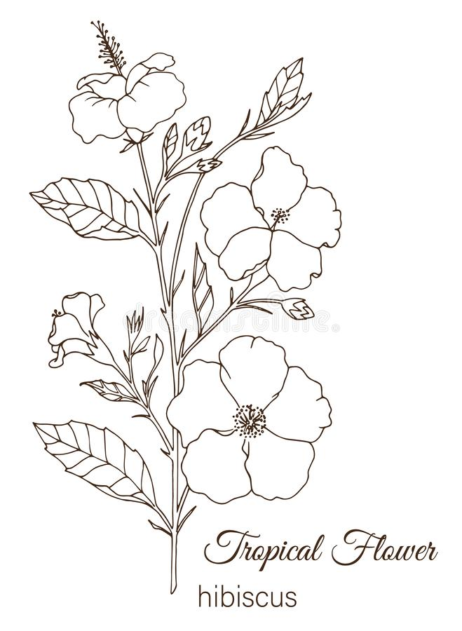 Hibiscus Flower Monochrome Drawing For Coloring Book Stock