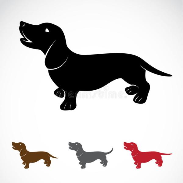 vector of dog dachshund