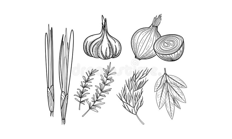 Herbs And Spices Banner Template With Natural Products