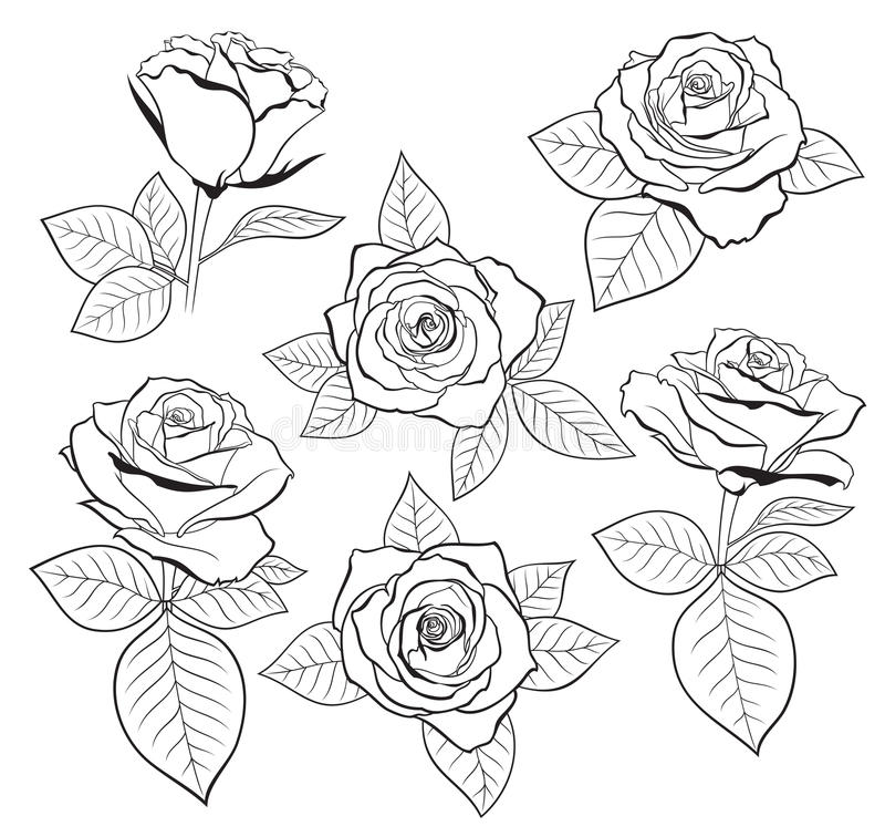 Vector Set Of Detailed, Isolated Outline Rose Bud Sketches