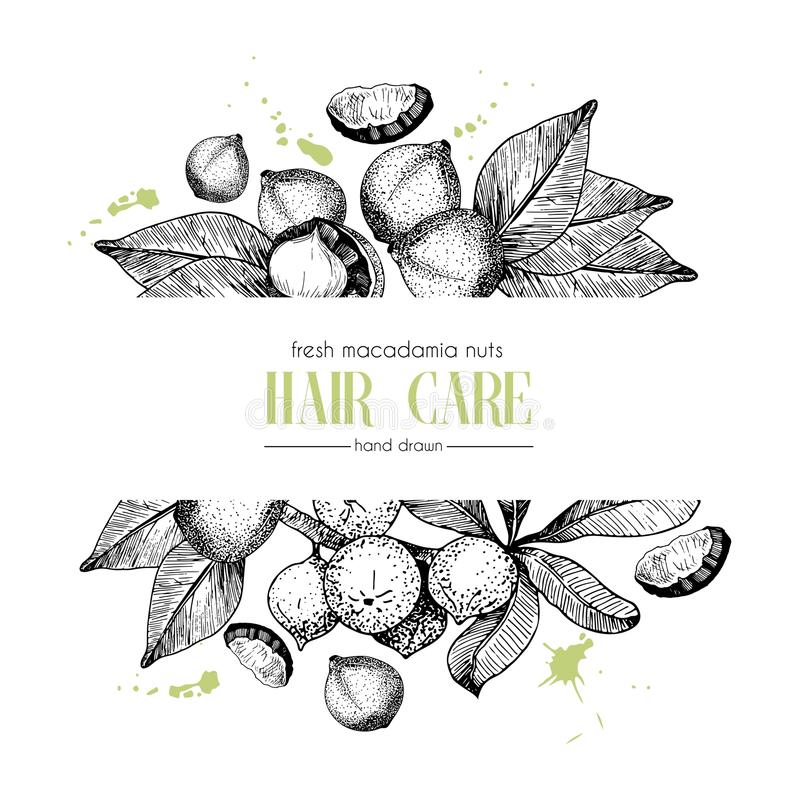 Vector Set Of Hair Care Ingredients. Organic Hand Drawn