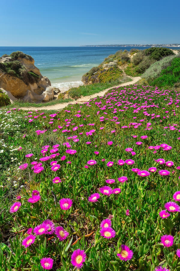 vertical spring landscape beach