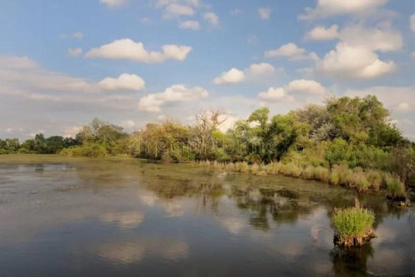 water retention pond landscape