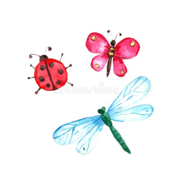 watercolor butterfly dragonfly