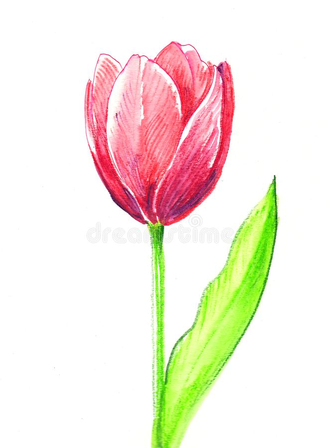 Colour Pencil Drawing Pictures Of Flowers Coloring Pages For Kids