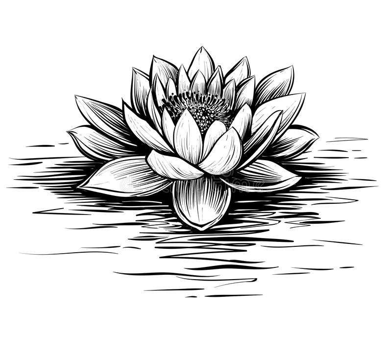 Waterlelie, Hand Getrokken Vector Lotus-illustratie Vector