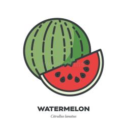 watermelon outline fruit vector doodle watercolor icon drawn effect sketch hand filled concept line