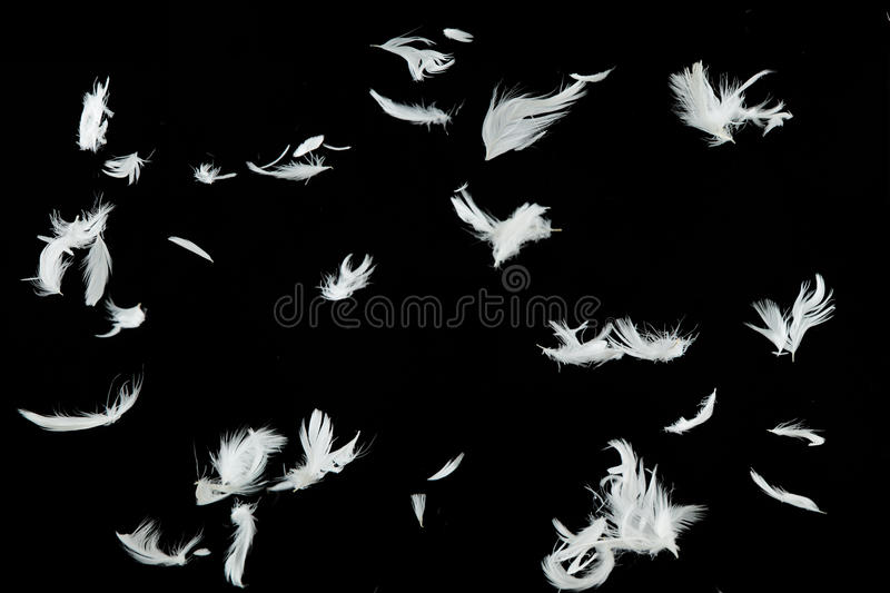 Falling Feathers Wallpaper White Feathers Falling Over Black Background Stock Photo