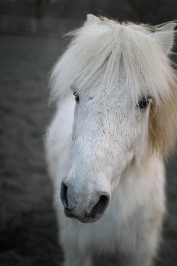 Animal Rights Wallpaper White Horse Face Stock Image Image Of Face Black Alert